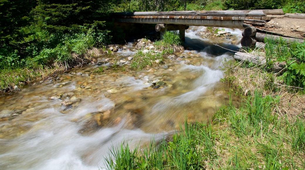 Jenny-järvi joka esittää joki tai puro ja koski