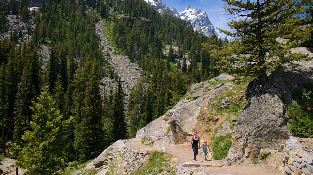 Jenny-järvi johon kuuluu rauhalliset maisemat, patikointi tai kävely ja vuoret