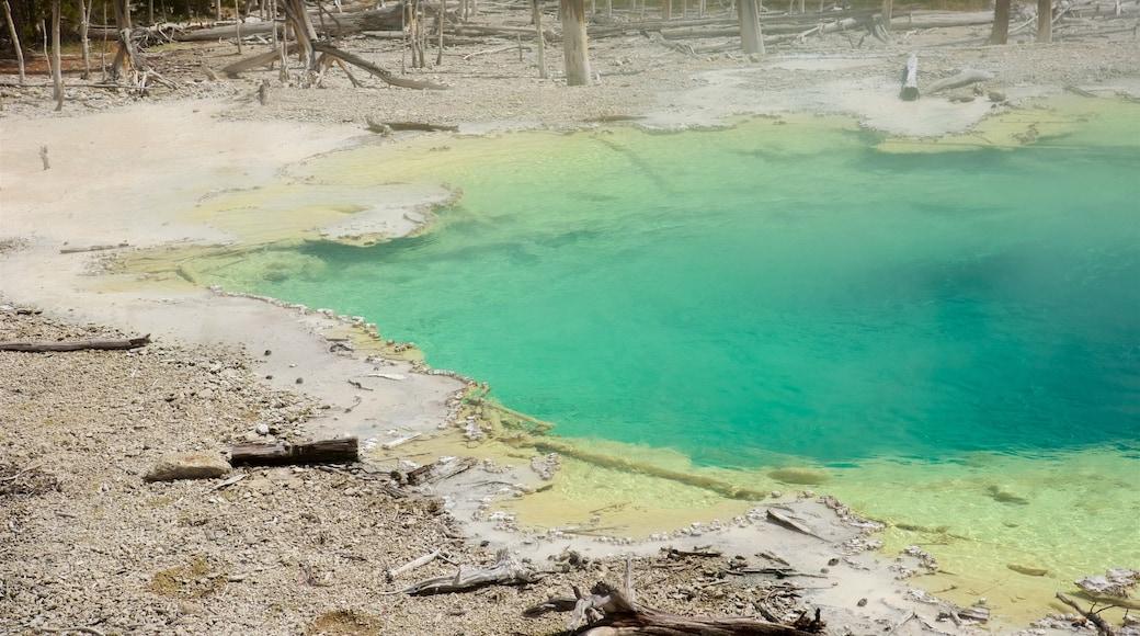 諾里斯噴泉盆地 其中包括 溫泉