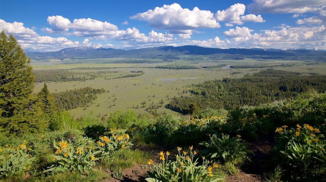 Grand Tetonin kansallispuisto johon kuuluu maisemat, luonnonvaraiset kukat ja rauhalliset maisemat