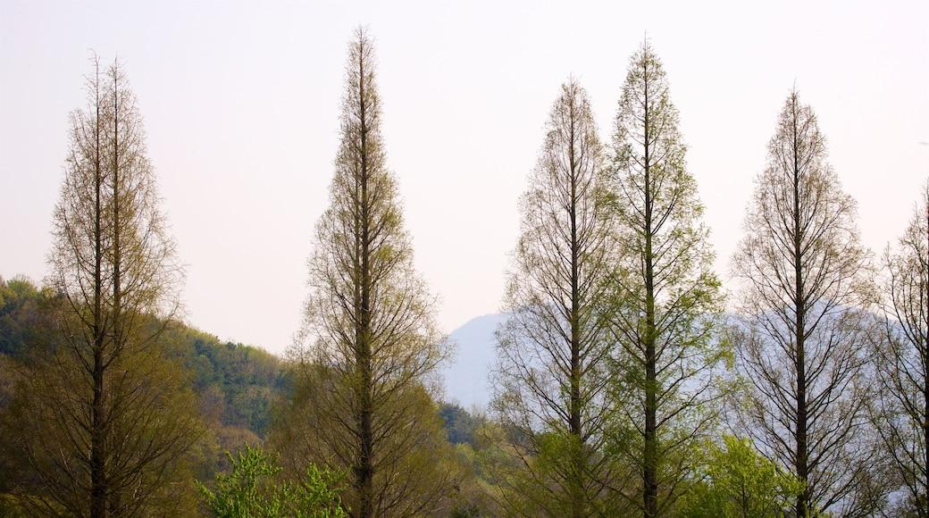 용인 을 특징 숲 풍경 과 일몰