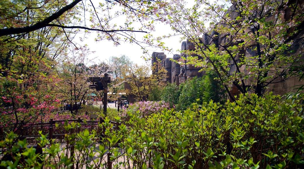 에버랜드 을 특징 야생화 과 정원