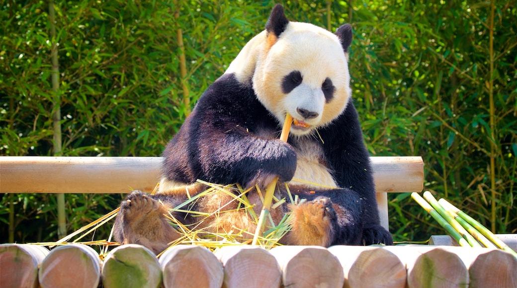 에버랜드 이 포함 육지 동물 과 동물원의 동물