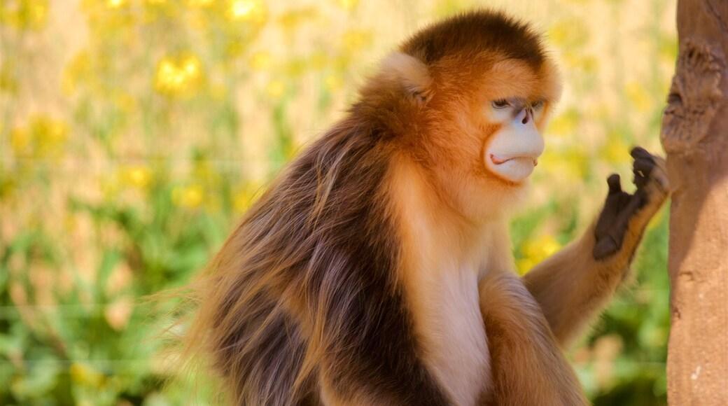 에버랜드 이 포함 동물원의 동물 과 귀엽고 친근한 동물