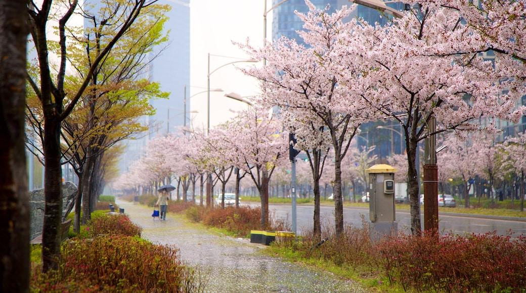 Incheon que inclui uma cidade e flores silvestres assim como uma mulher sozinha