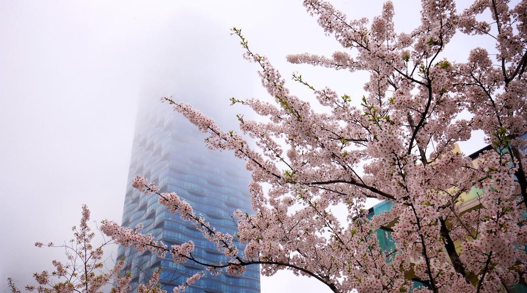 NC Cube Canal Walk 購物中心 呈现出 高樓大廈, 薄霧或有霧氣 和 野花