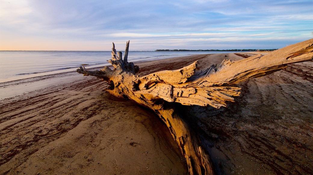 Driftwood Beach featuring a sunset, a sandy beach and general coastal views