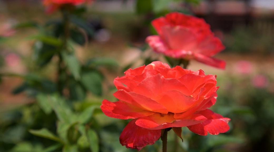 Thomasville Rose Garden featuring wild flowers