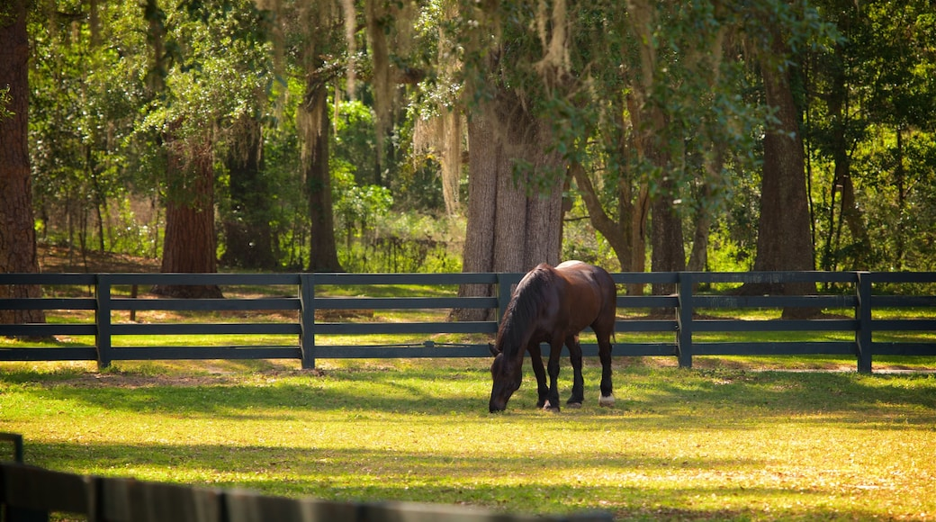Pebble Hill Plantation which includes farmland and land animals