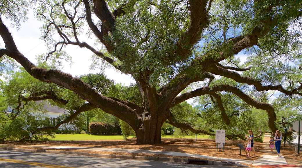 Thomasville\'s Historic Big Oak showing a park as well as children