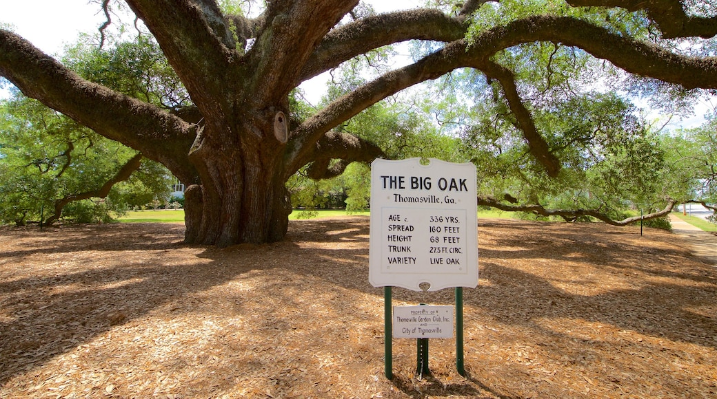 Thomasville\'s Historic Big Oak showing a garden and signage