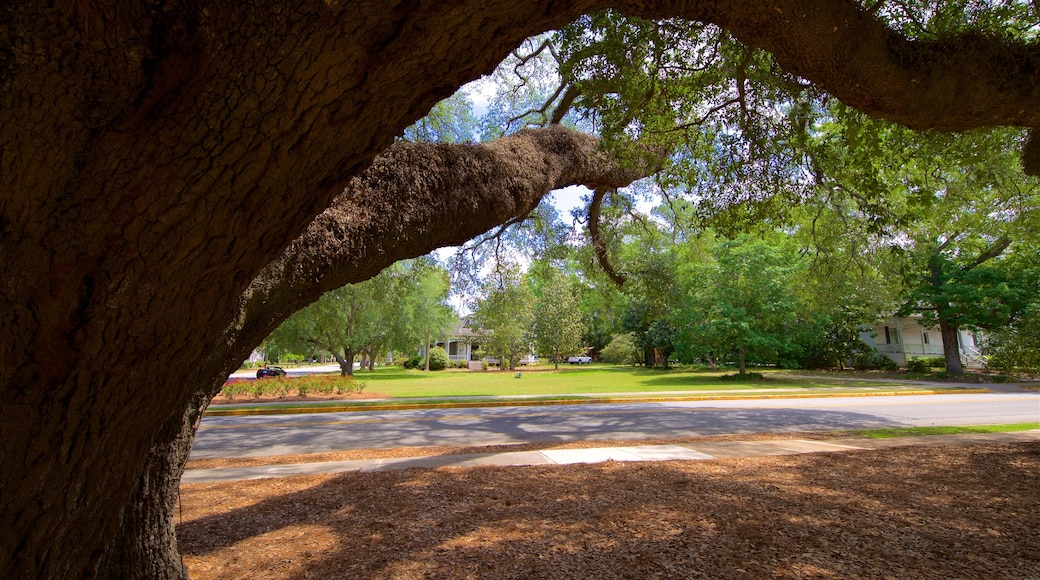Thomasville\'s Historic Big Oak featuring a garden