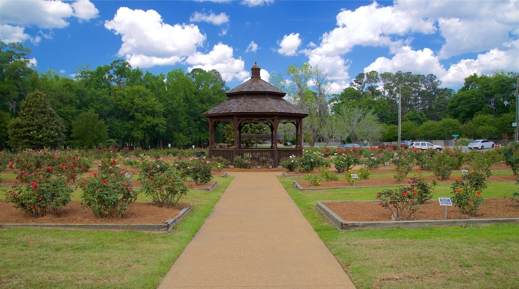 Thomasville Rose Garden showing a park and flowers
