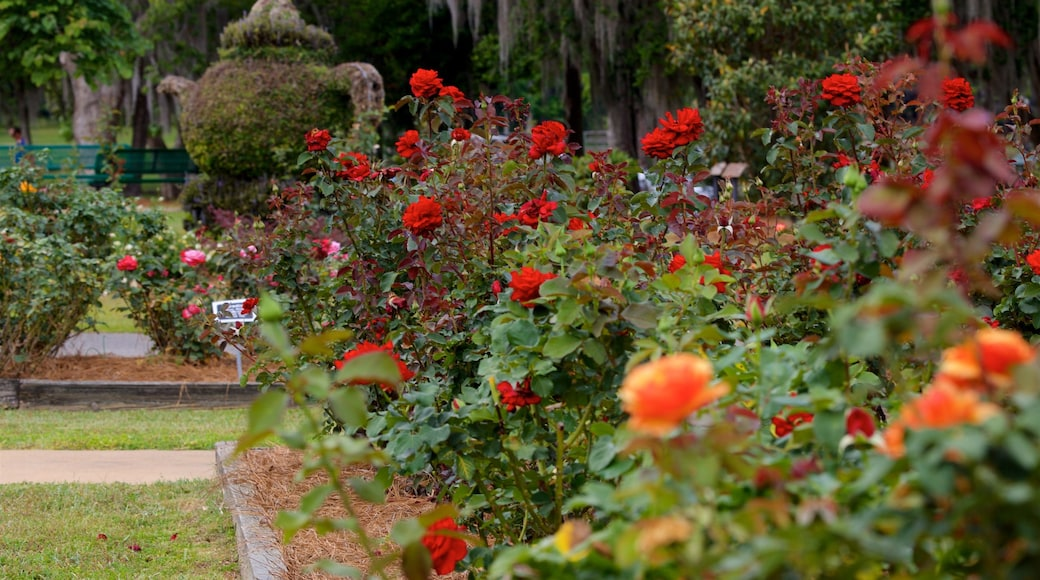 Thomasville Rose Garden featuring a park and wild flowers