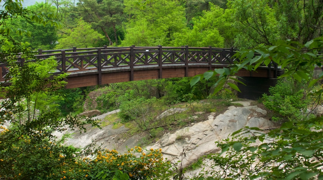 Bukhansan National Park showing forests and a bridge