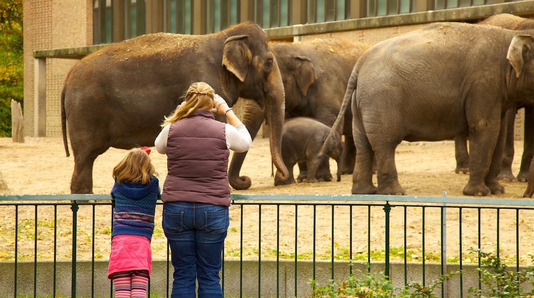 Zoológico de Berlín ofreciendo animales de zoológico y animales terrestres y también una familia