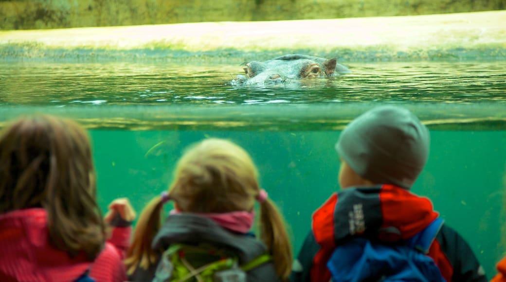 Zoológico de Berlín mostrando animales terrestres y animales de zoológico y también niños