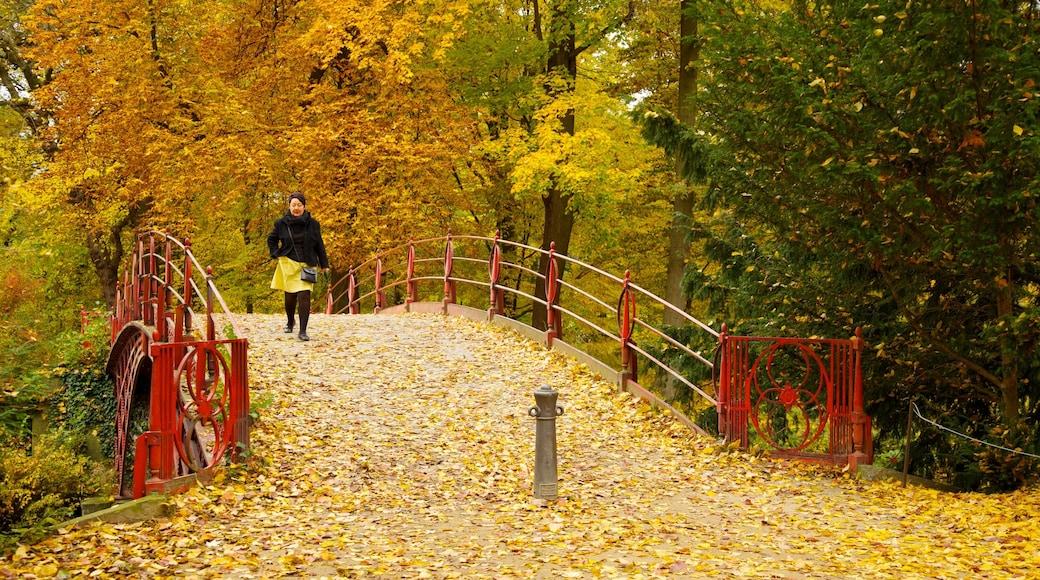 Château de Charlottenburg qui includes couleurs d\'automne, randonnée ou marche à pied et parc