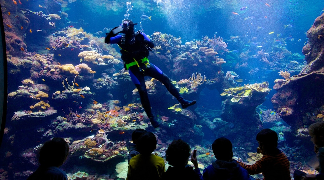 California Academy of Sciences featuring colorful reefs, interior views and marine life