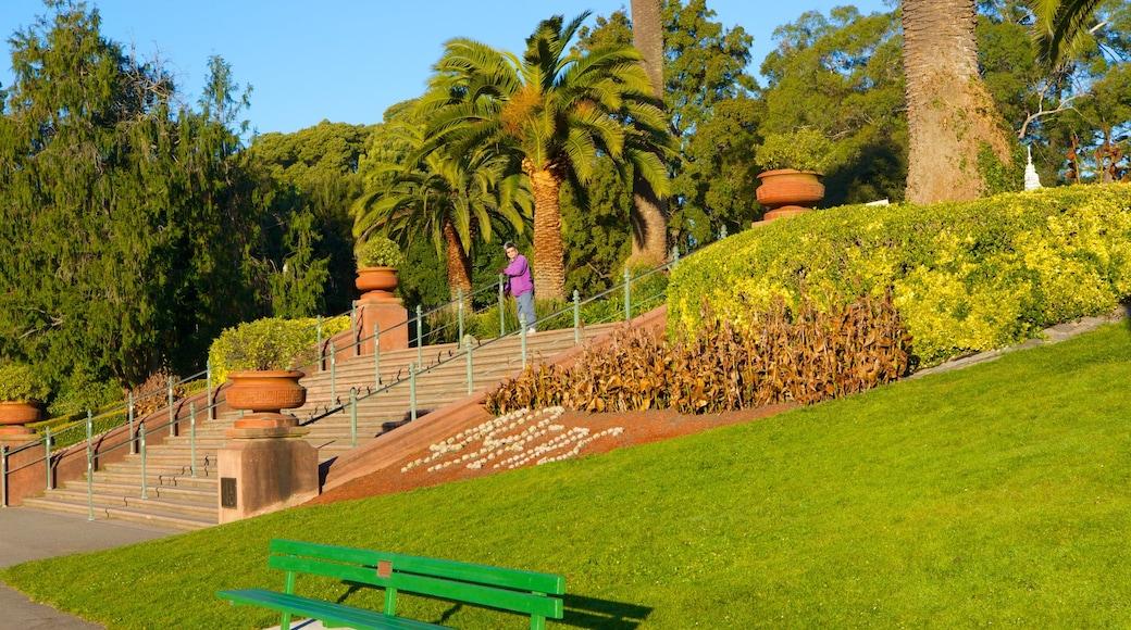 Golden Gate Park showing a garden and landscape views