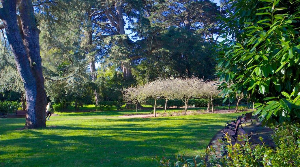 Golden Gate Park featuring a garden and landscape views