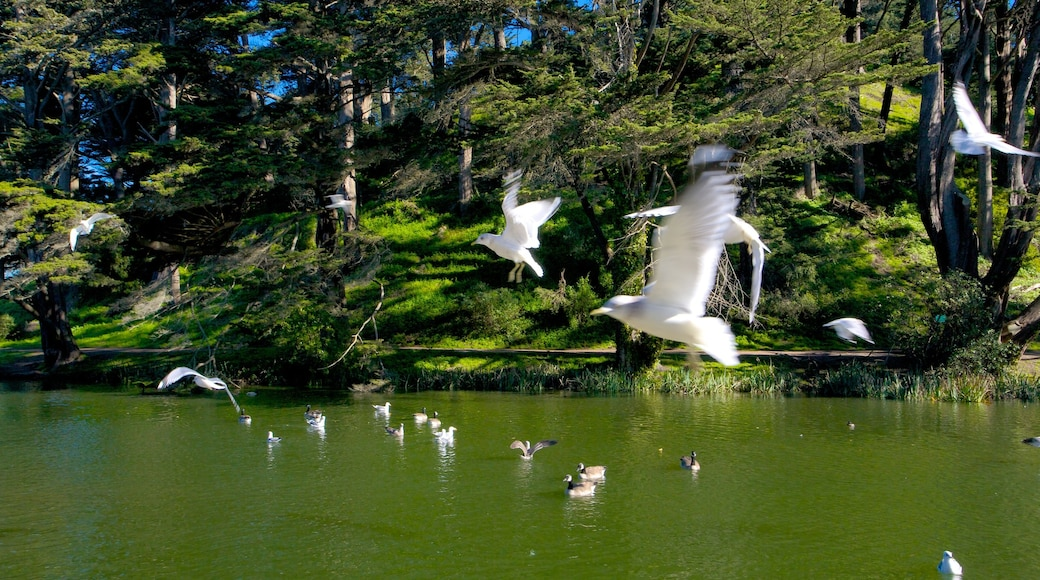 Golden Gate Park which includes bird life, forests and a park