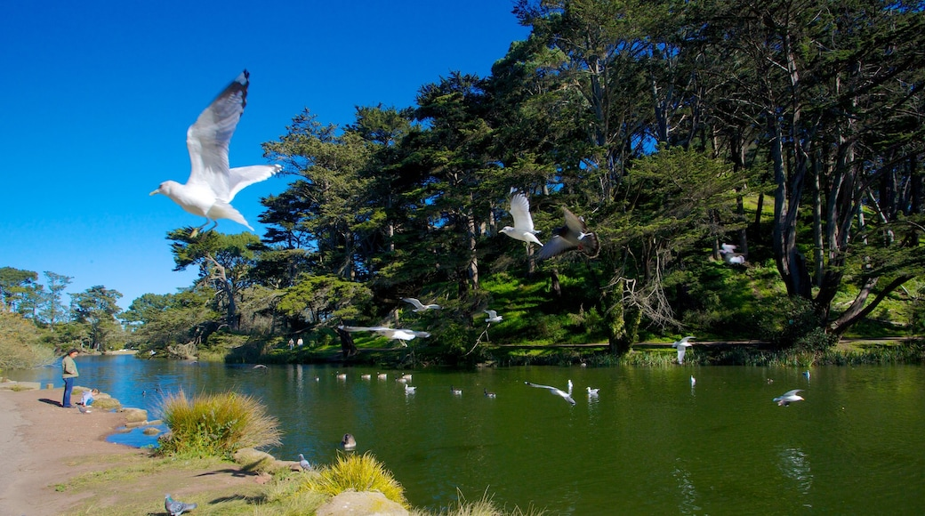 Golden Gate Park featuring a garden, forest scenes and a lake or waterhole