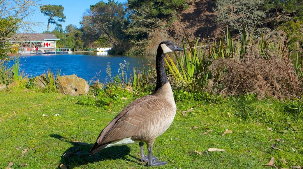 Golden Gate Park which includes a lake or waterhole, a garden and bird life