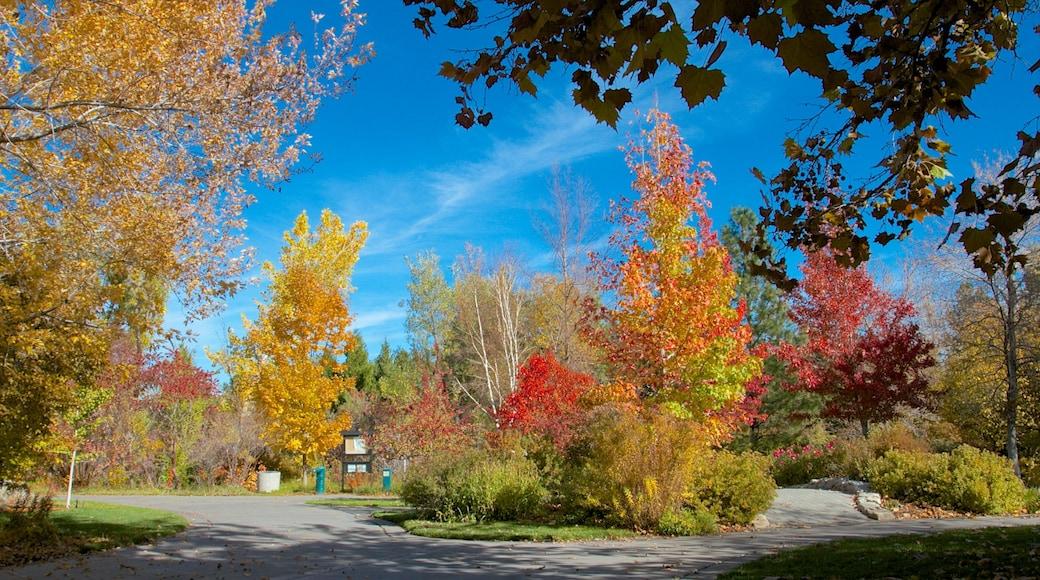 Reno featuring autumn leaves