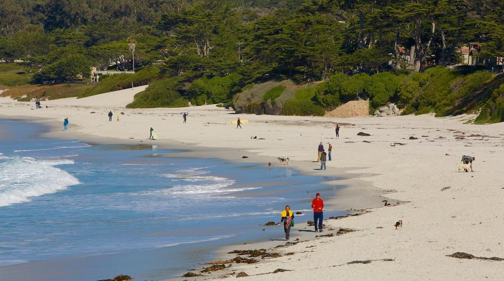 Carmel Beach que inclui cenas tropicais e uma praia de areia