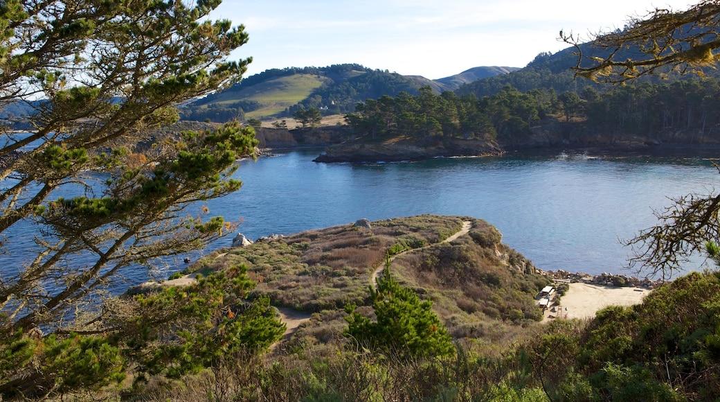 Point Lobos State Reserve que inclui cenas de floresta, um lago ou charco e paisagem