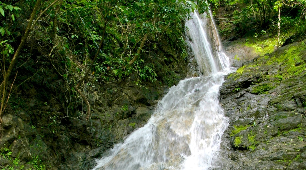 Costa Rica showing a waterfall
