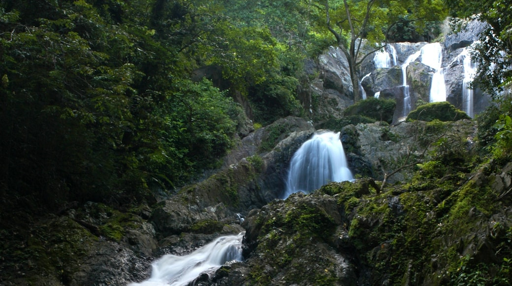 Trinidad which includes a waterfall and forest scenes