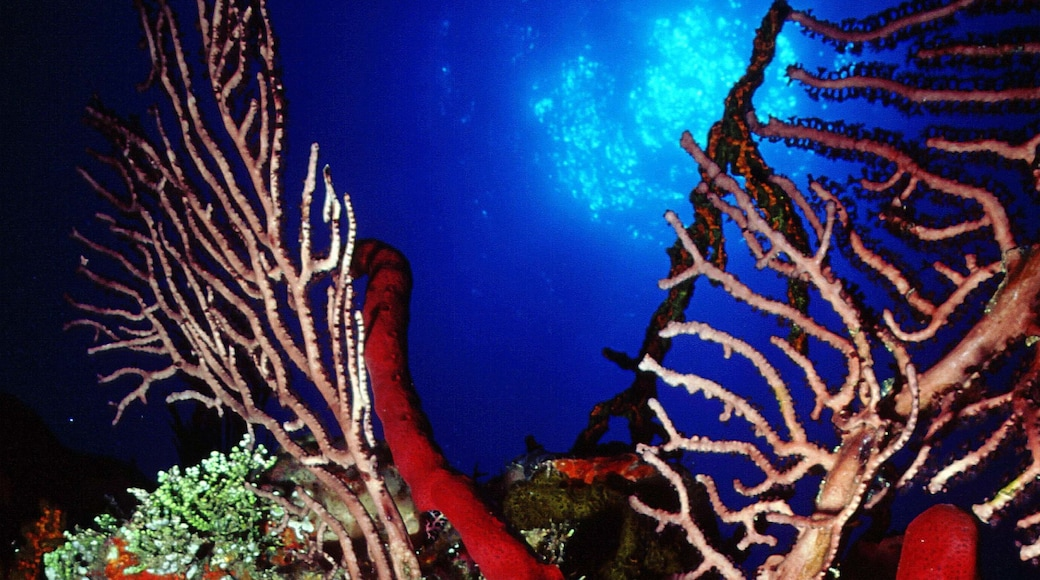 Cayman Islands featuring colorful reefs and marine life