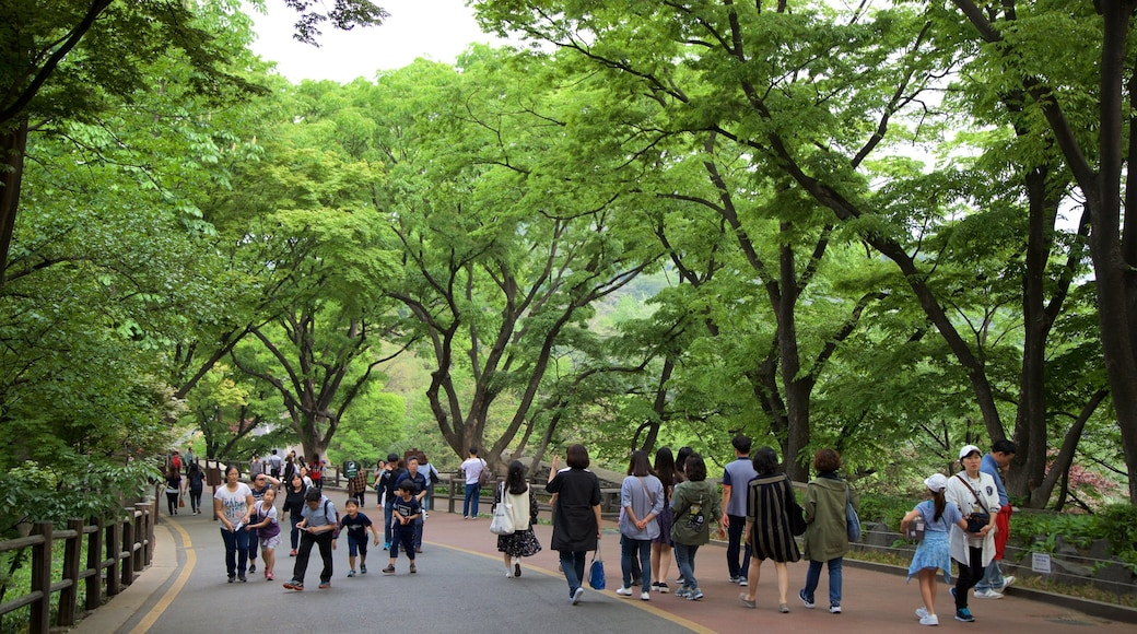 Namsan Park showing hiking or walking and a garden as well as a small group of people