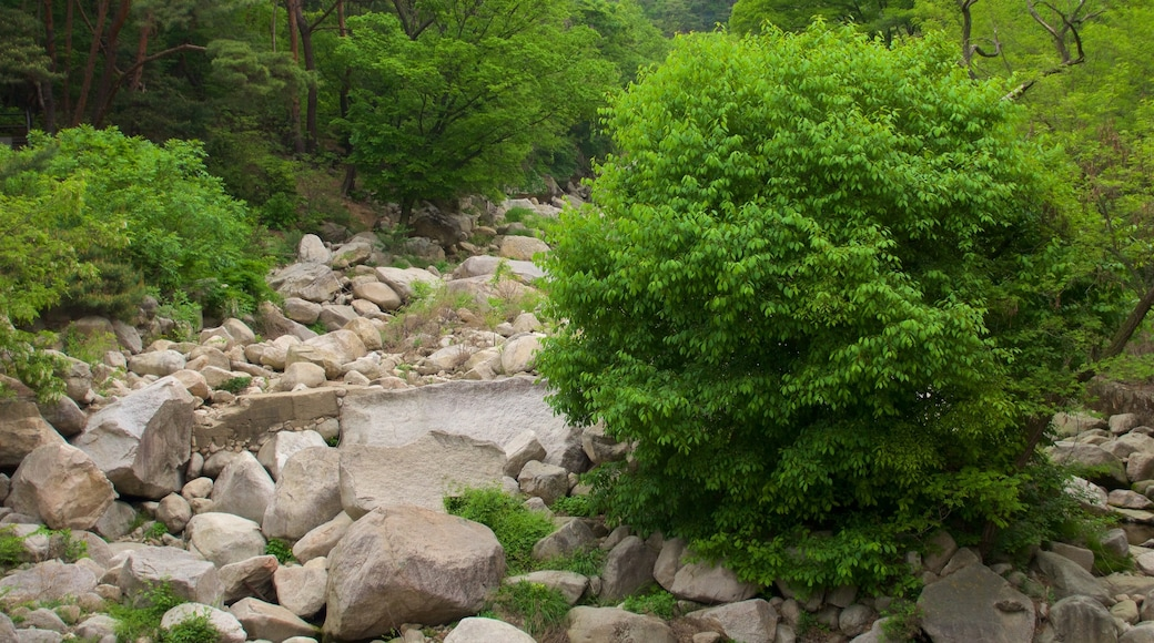 Bukhansan National Park which includes forest scenes