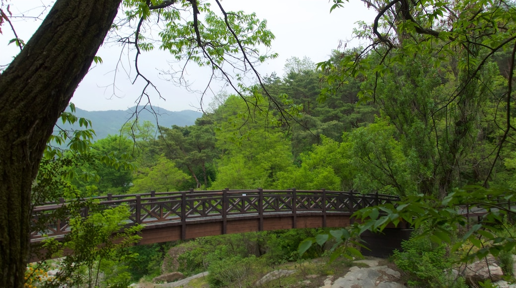Bukhansan National Park which includes a bridge and forest scenes