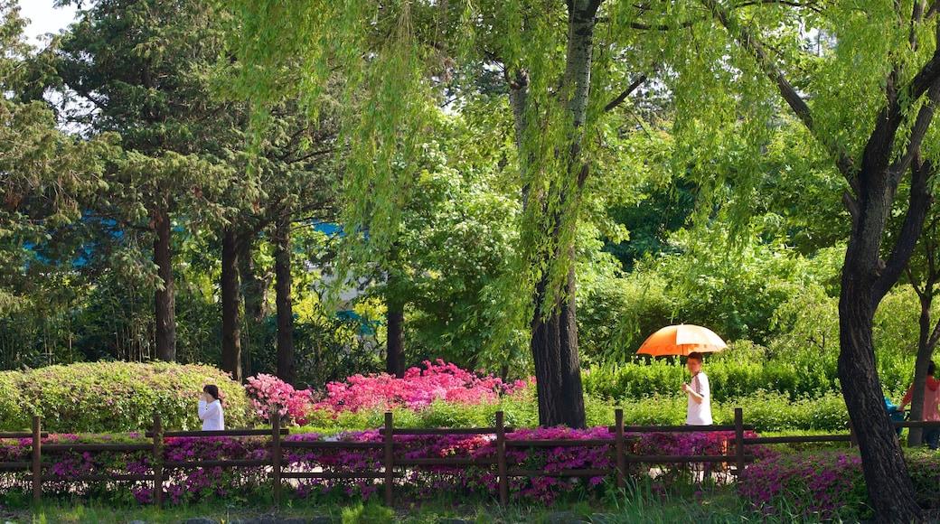 สวน Yongsan Park เนื้อเรื่องที่ สวน และ ดอกไม้ป่า