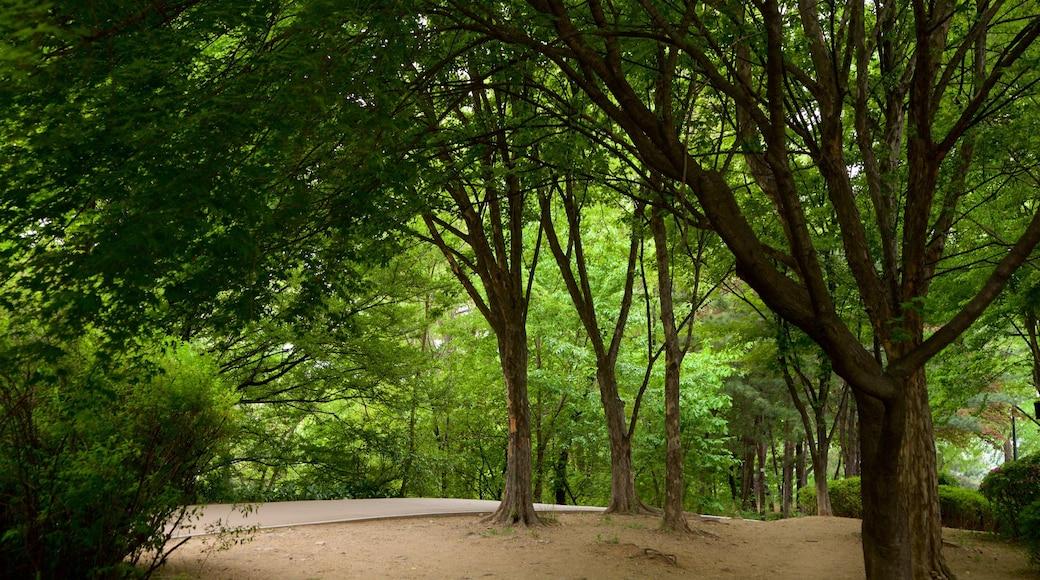 สวนพฤกษศาสตร์นัมซัน แสดง สวนสาธารณะ