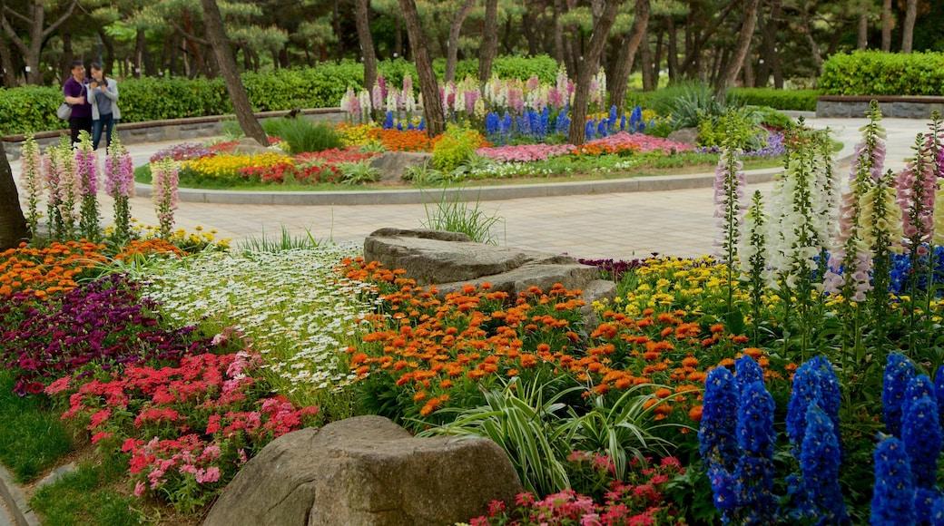 สวนพฤกษศาสตร์นัมซัน ซึ่งรวมถึง สวน และ ดอกไม้ป่า ตลอดจน คู่รัก
