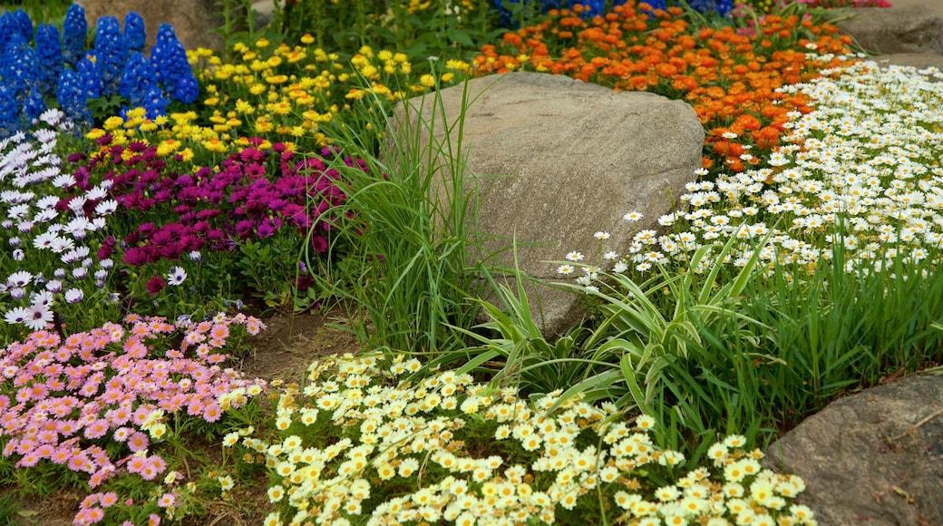 สวนพฤกษศาสตร์นัมซัน ซึ่งรวมถึง ดอกไม้ป่า
