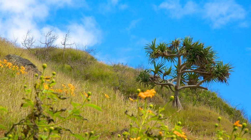 Gold Coast mettant en vedette fleurs sauvages