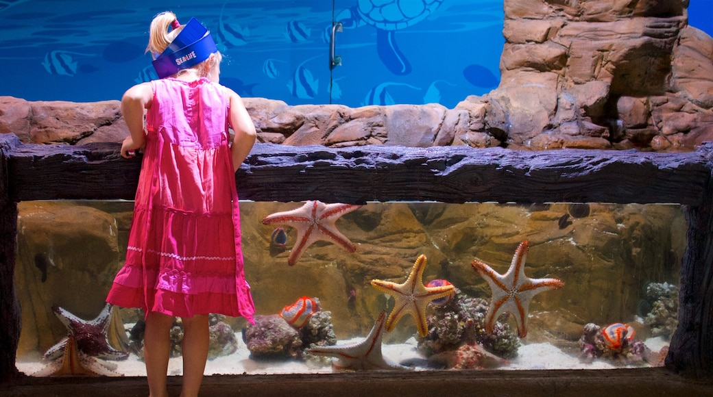 Mooloolaba featuring marine life and interior views as well as an individual child