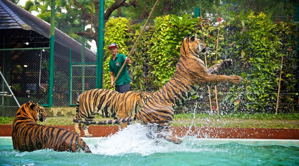 Phuket - Phang Nga which includes dangerous animals and zoo animals as well as an individual male