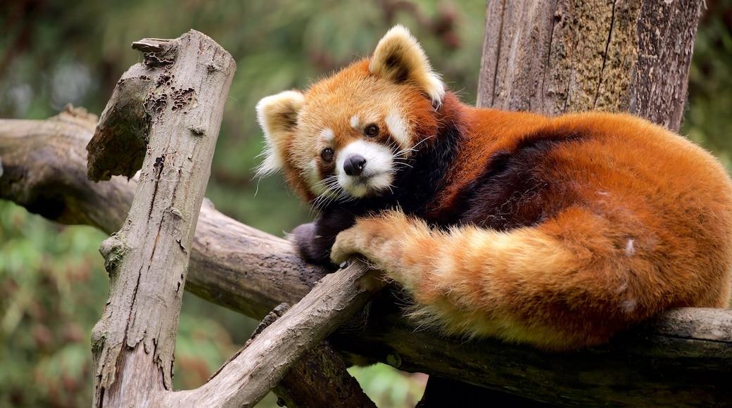 Prospect Park Zoo som inkluderer koselige dyr