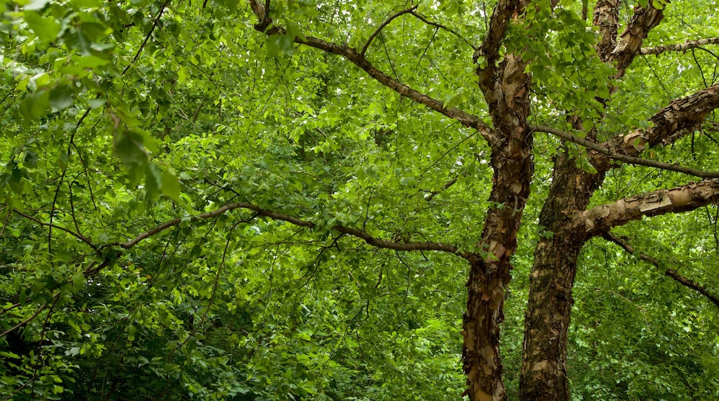 Prospect Park som viser skog og park