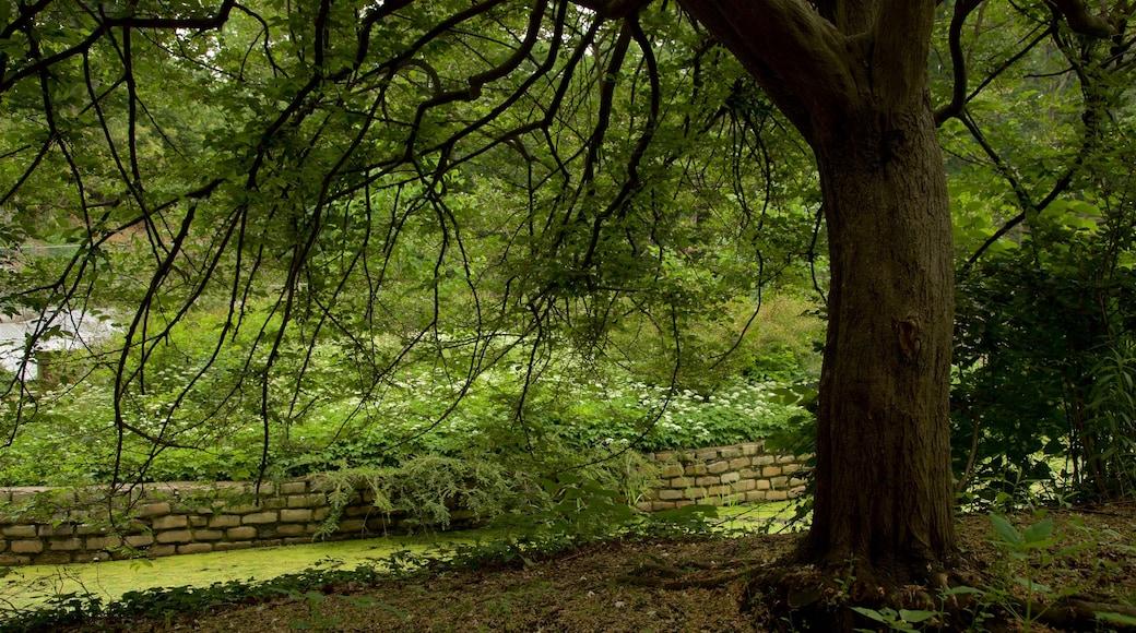 Prospect Park fasiliteter samt skoglandskap og hage