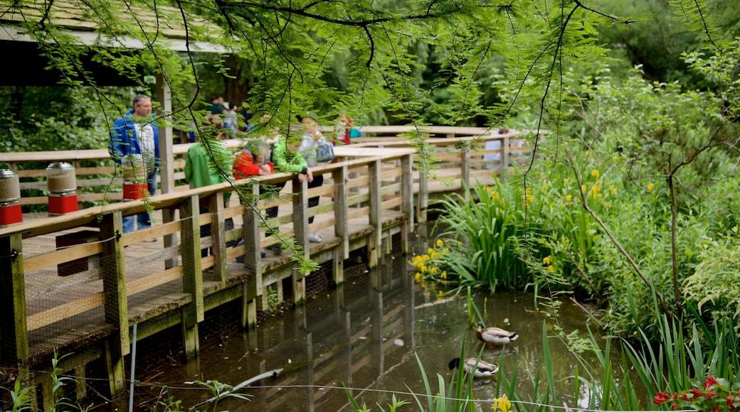 Prospect Park Zoo som viser fugleliv, dyrehagedyr og dam