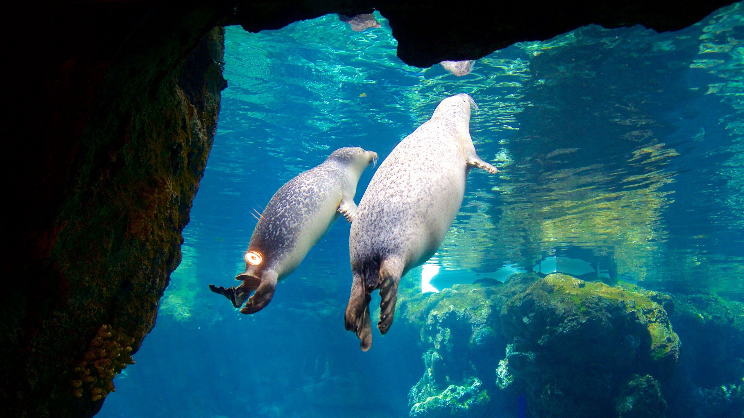 Scoprite le strane e meravigliose creature degli abissi in uno dei più grandi acquari d'Europa, popolato da squali, lamantini, pinguini e pesci tropicali.