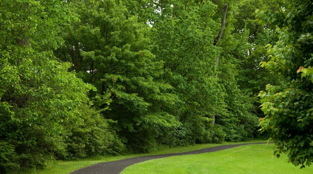 브랜치 브룩 공원 이 포함 공원